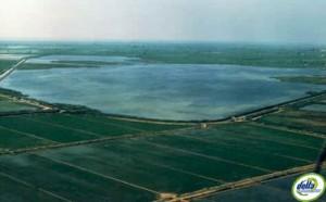 Canal vell delta de l'Ebre
