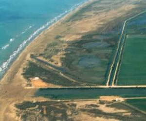 Riu Migjorn delta de l'Ebre