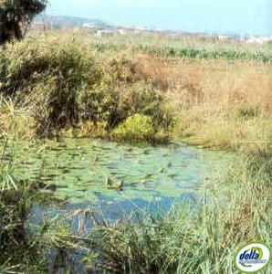 Ullals delta de l'Ebre
