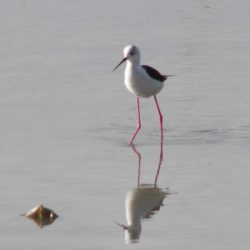 Observació d'aus