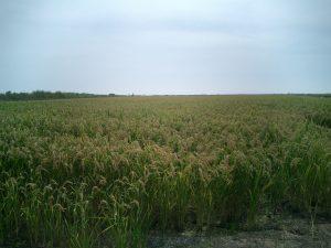el delta de l'Ebre