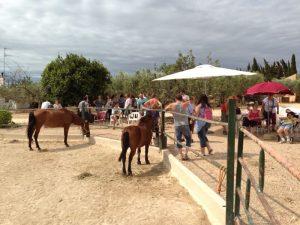 cavallcon1